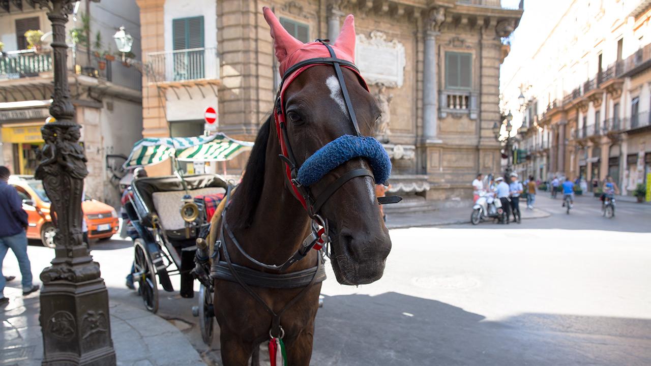 Сицилийский конь в наушниках