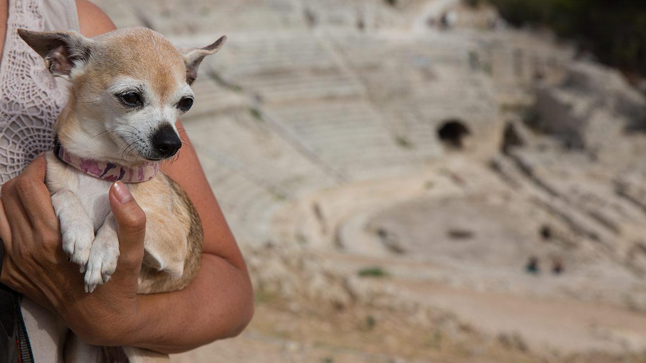 Собака-убийца в Сиракузах