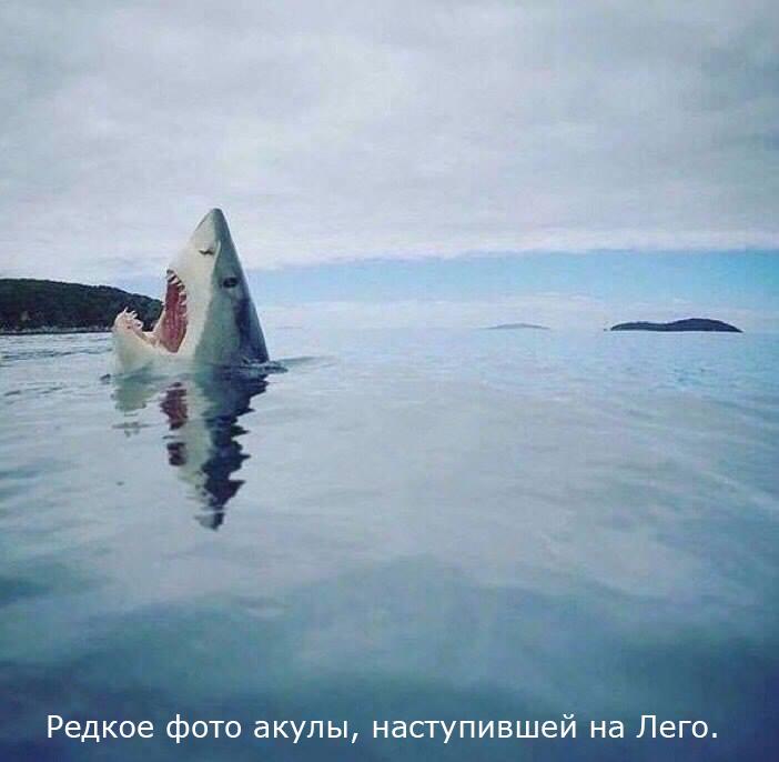 Редкое фото акулы