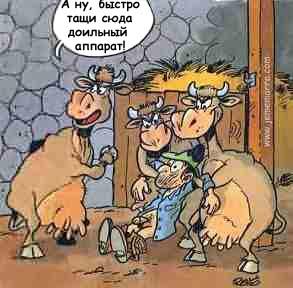 Бодрые коровы