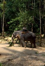 Тайский слоняра для катания