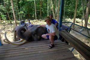 Почёс тайского слона