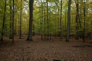 Осенний лесок под Фонтенбло
