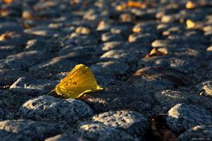 Скоро осень, вянет лист в Савонлинне