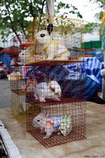 Здоровские тайские кролики