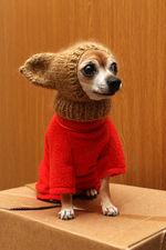 Собака-убийца и лютые холода