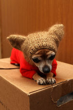 Собака-убийца и лютые холода 2