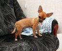 Собаке-убийце пять месяцев