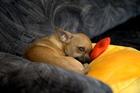 Собака-убийца, послеобеденная дрёма