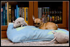 Собака-убийца встречает новый год в обществе плюшевых крыс
