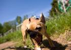 Собака-убийца недовольна колючей травой