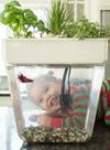 Домашняя акваферма